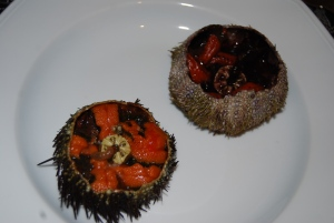 two kinds of sea urchin