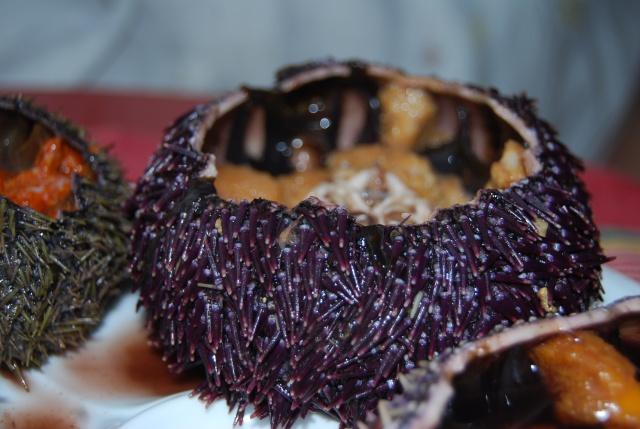 purple Brittany oursin