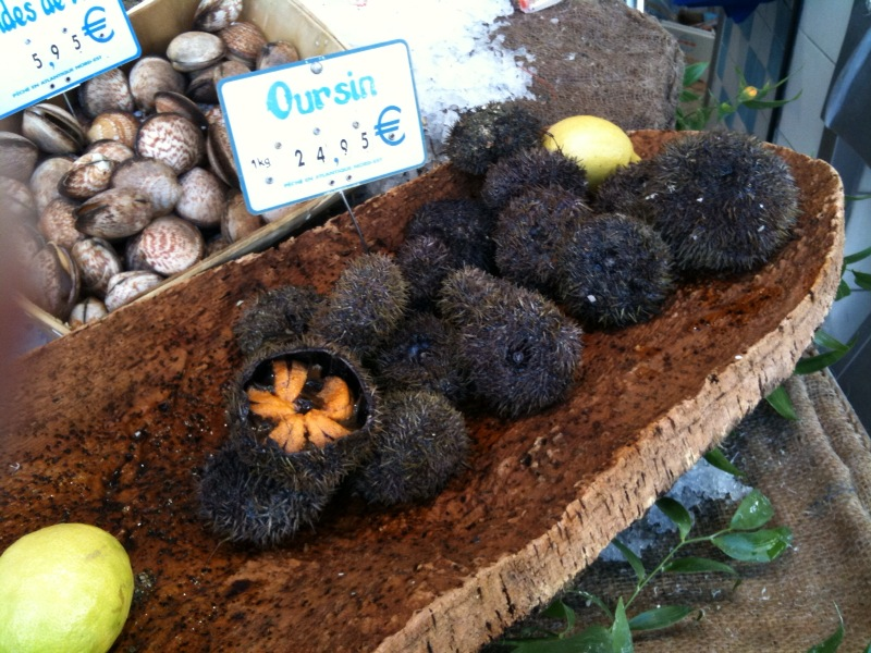 sea urchins (oursins)